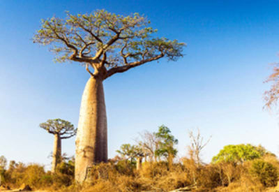 Baobab – superfood with a social conscience