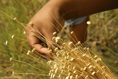 Golden grass offers sustainable alternative to fashion jewelry