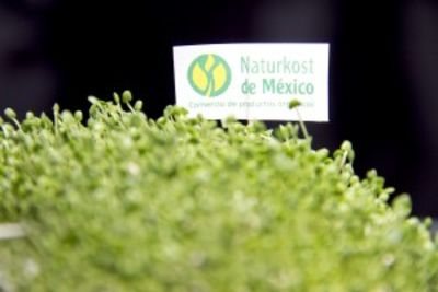 Chia supply bottleneck, Naturkost confident of meeting more demand
