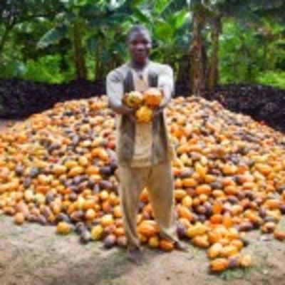 Continuing West Africa cocoa issues see major brands back sustainability initiatives