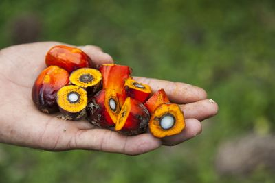 "Natural Habitats champions sustainability with ""Palm Oil Done Right"""